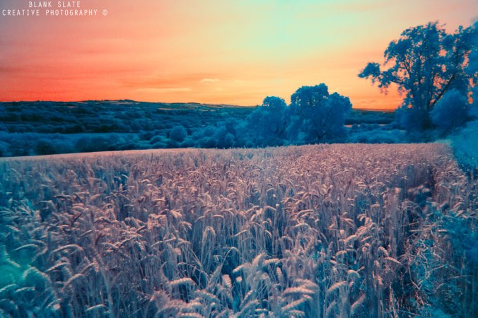Infrared photography in the Tyne Valley