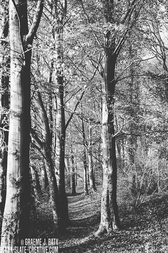 Newcastle black and white 14112011